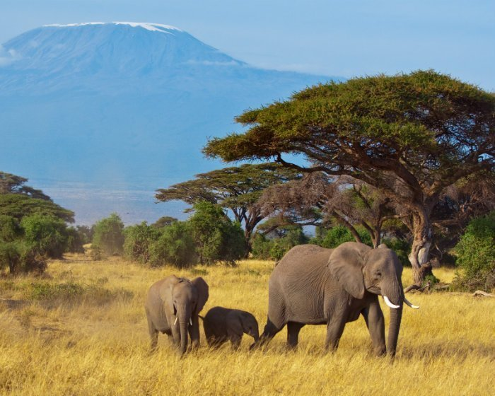 Amboseli National Park in Kenia